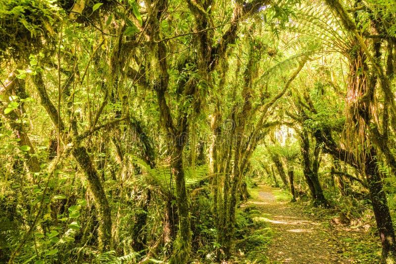 Forrest ścieżka zdjęcie royalty free