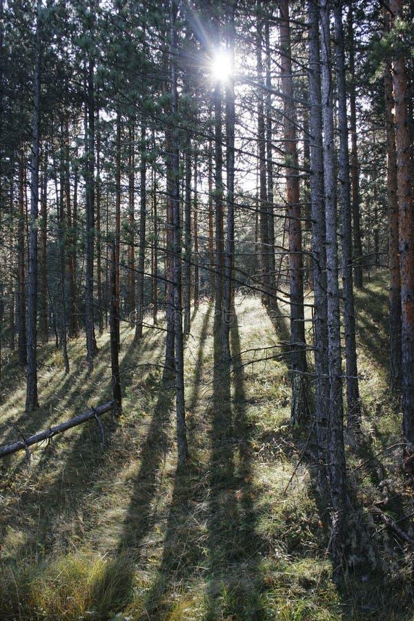 Forrest foto de archivo libre de regalías