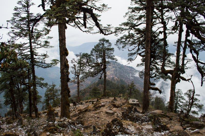 Forrest Along Everest-Trek van het Basiskamp in het Nepalese Himalayagebergte stock afbeeldingen