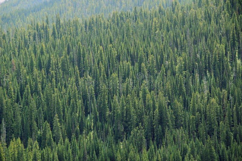 Forrest auf Gebirgsabhang lizenzfreies stockfoto