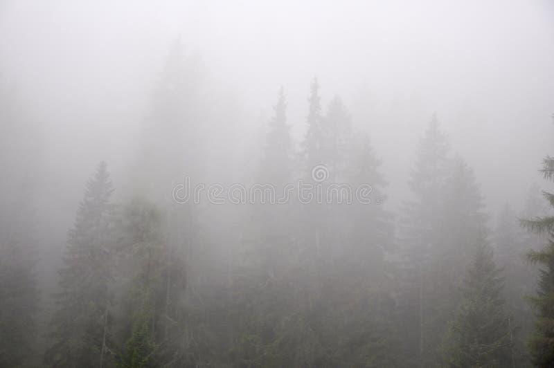Forrest dans le brouillard quelque part dans les alpes images stock