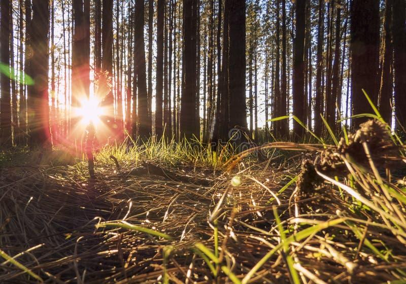 Forrest dans le coucher du soleil photo stock