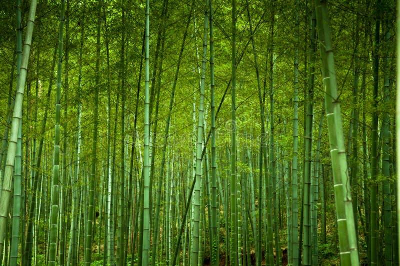 Forrest di bambù immagini stock libere da diritti