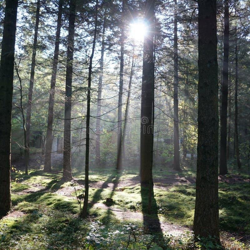 forrest drzewna słońca nieba natura obrazy royalty free