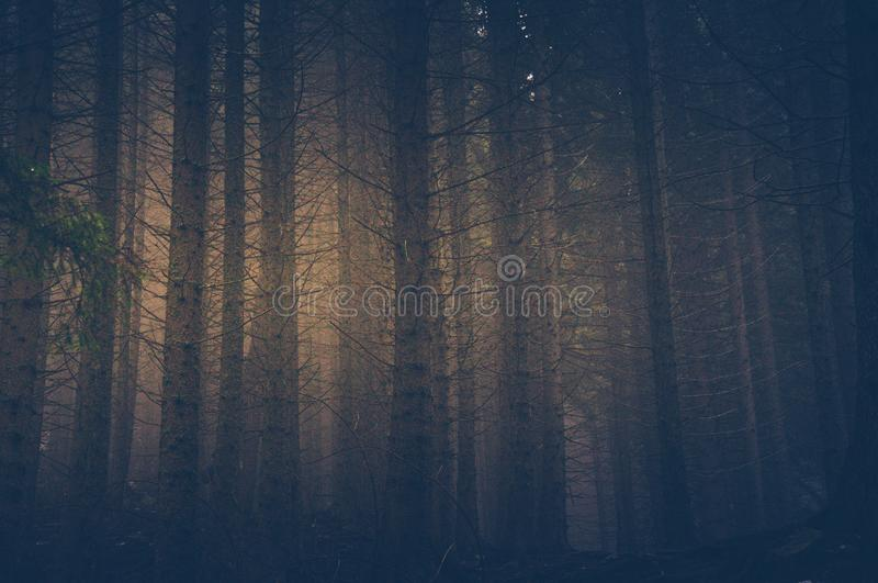Forrest en brouillard photos stock