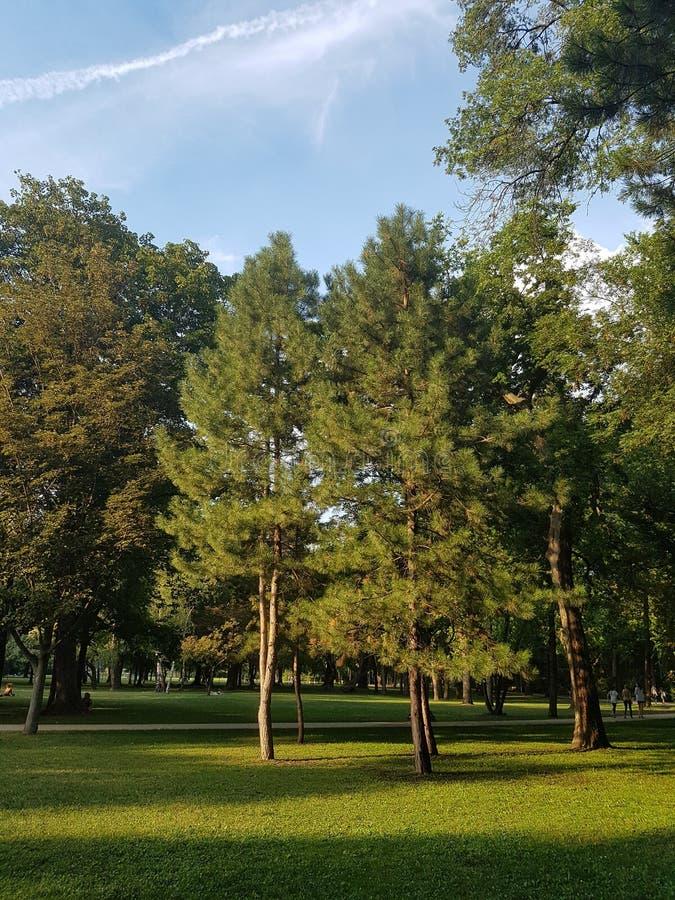 Forrest en parc images libres de droits