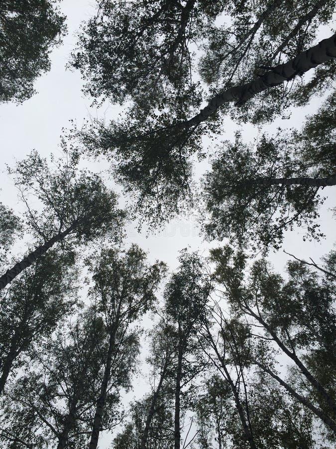 Forrest escuro fotografia de stock