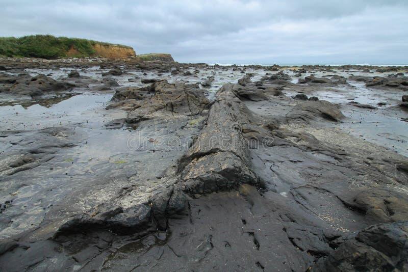Forrest est devenu bois pétrifié sur une plage photographie stock libre de droits
