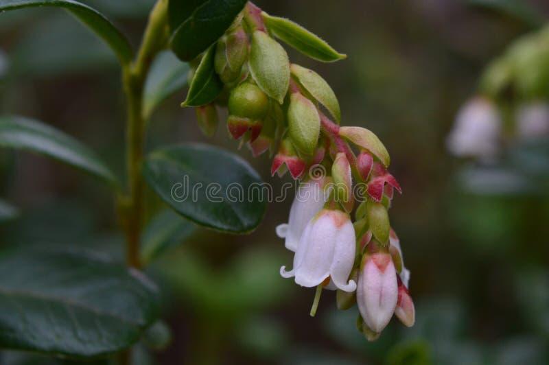 Forrest kwiat obrazy stock