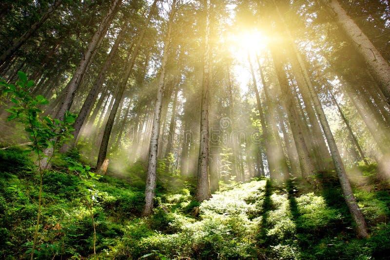 Forrest mystique image libre de droits