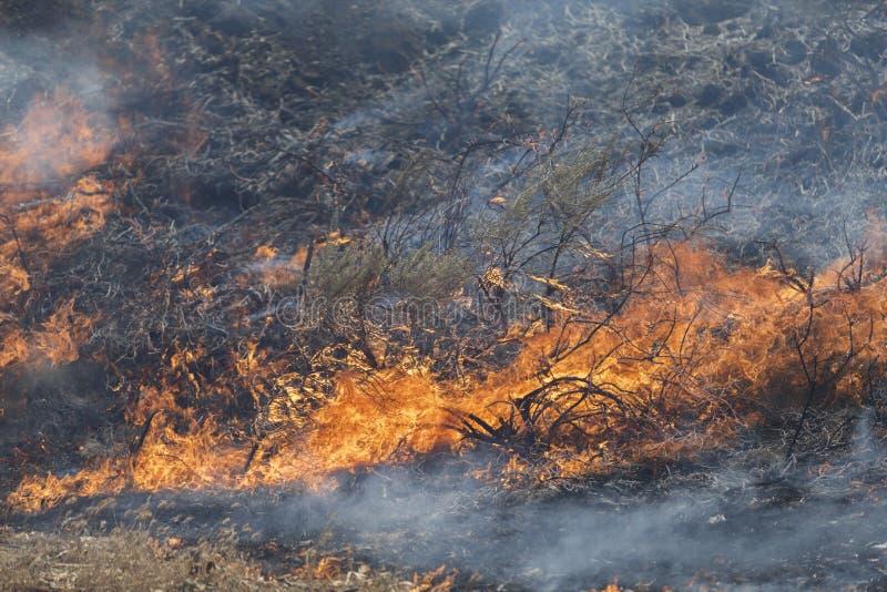 Forrest ogień - Camarillo wiosny 5-2-2013 zdjęcie royalty free