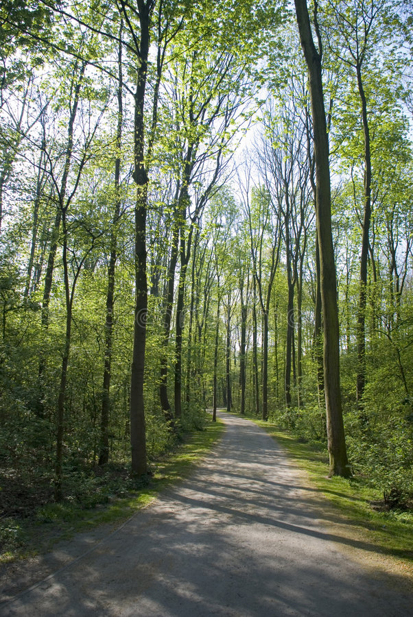 Free Forrest Path Stock Photos - 5652943