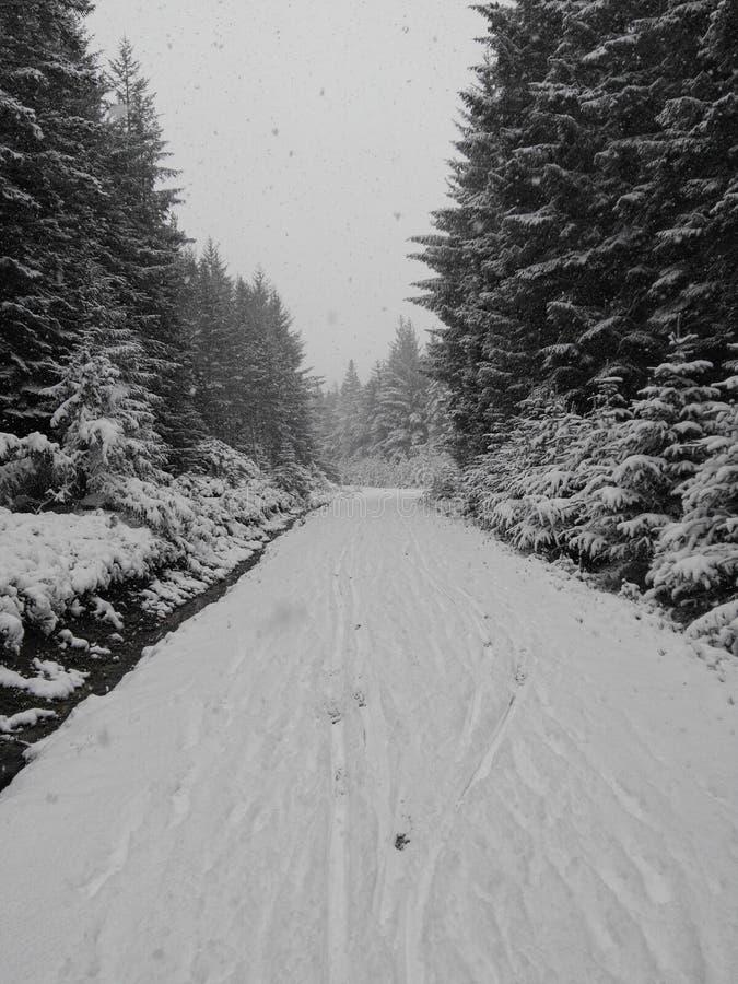 Forrest path fresh snow stock photos