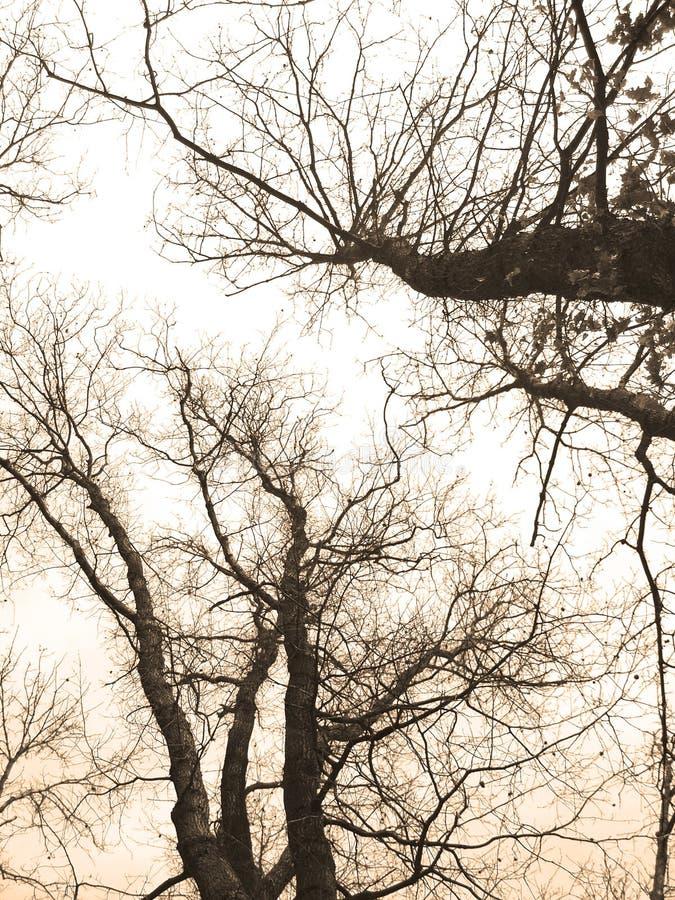Forrest rêveur images libres de droits