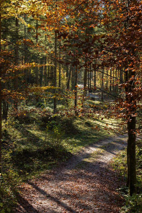 Autum forreest with little road in th middle stock images