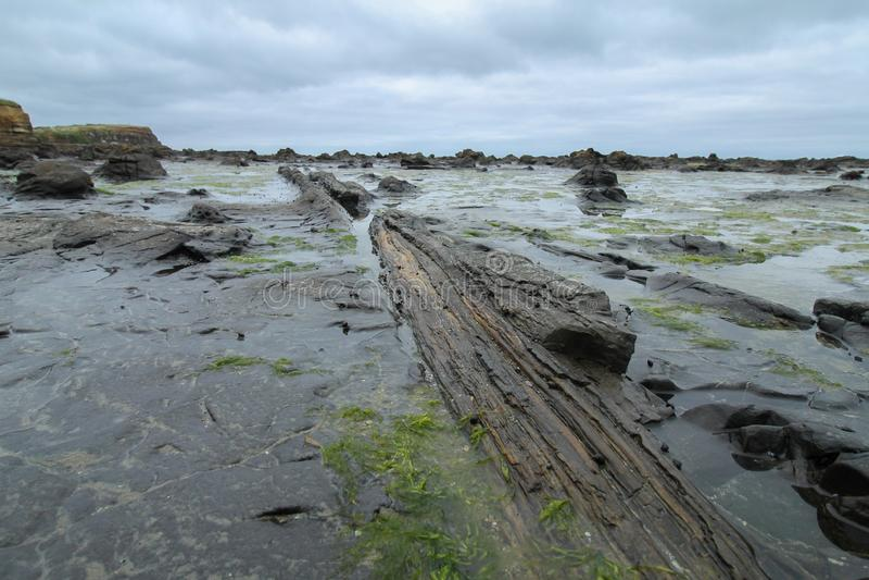 Forrest se convirtió en madera petrificada en una playa fotografía de archivo libre de regalías
