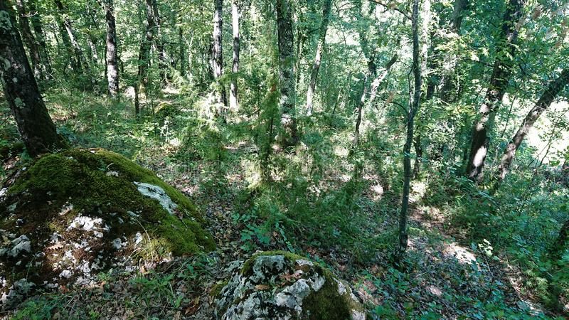 Large rocks in a forrest. A Forrest showing two large rocks stock photos