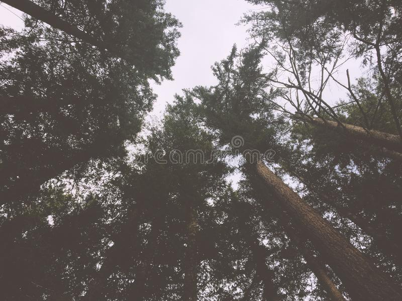 Forrest Sky royalty free stock photos