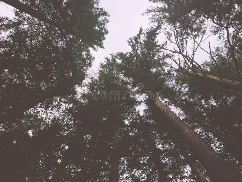 Forrest Sky fotografie stock libere da diritti