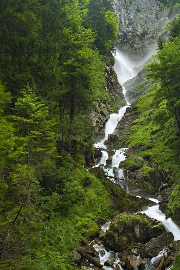 Forrest suisse avec la cascade photographie stock