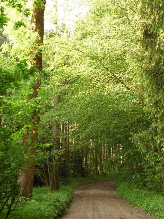 Forrest in summer walk stock images