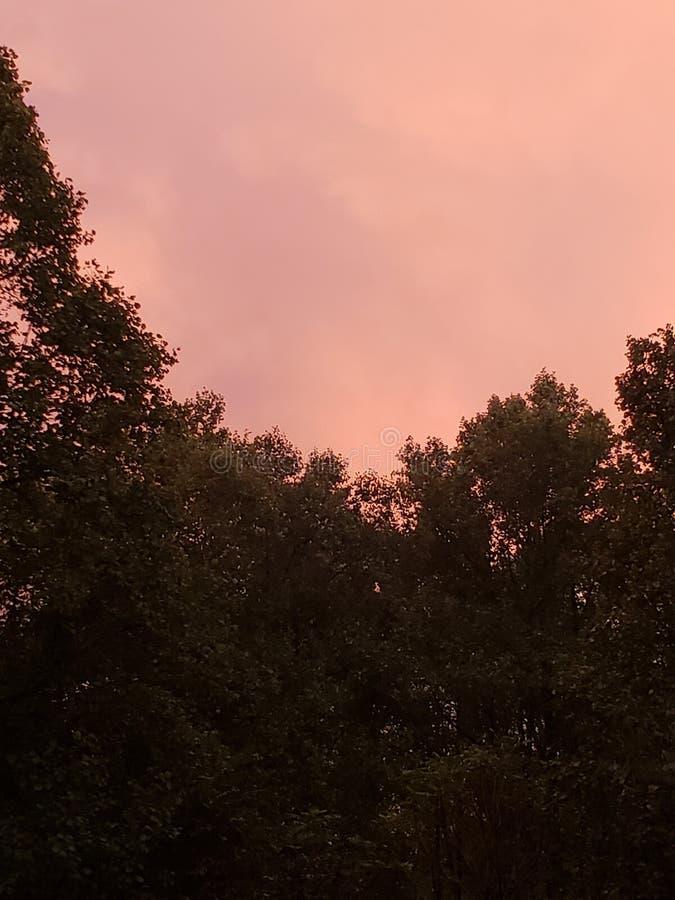 Forrest Sunset fotos de archivo