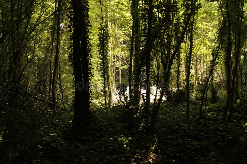 Download Forrest trees shadows stock image. Image of ambiance - 43146073