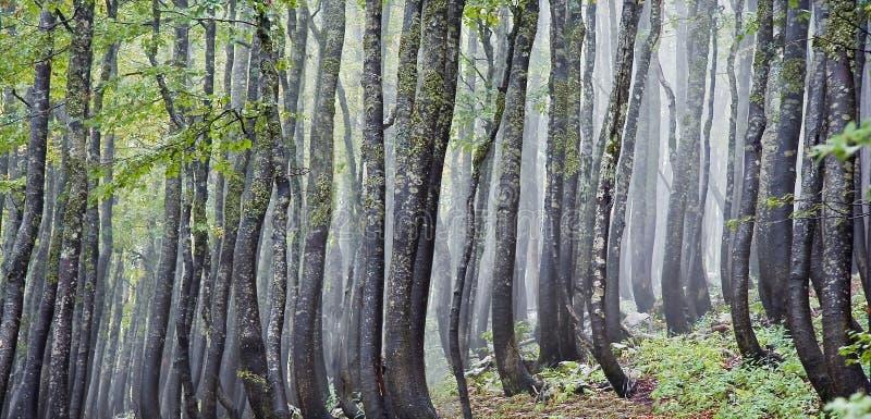 Forrest un jour brumeux images libres de droits