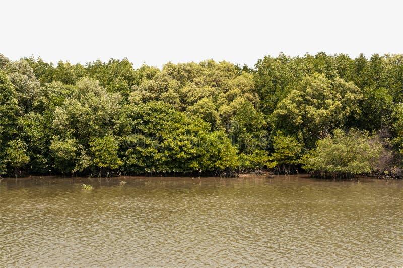 Forrest von grünen Bäumen auf Bergabhang mit Fluss und Bank lizenzfreies stockfoto
