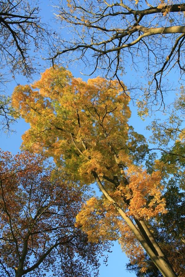 Forrest w żółtych i złotych jesień kolorach zdjęcia royalty free
