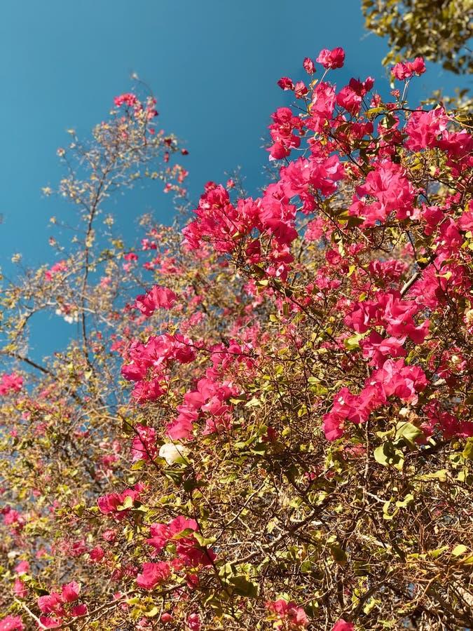 Forsa blommor i Merida, Mexico - MERIDA - YUCATANEN royaltyfria bilder