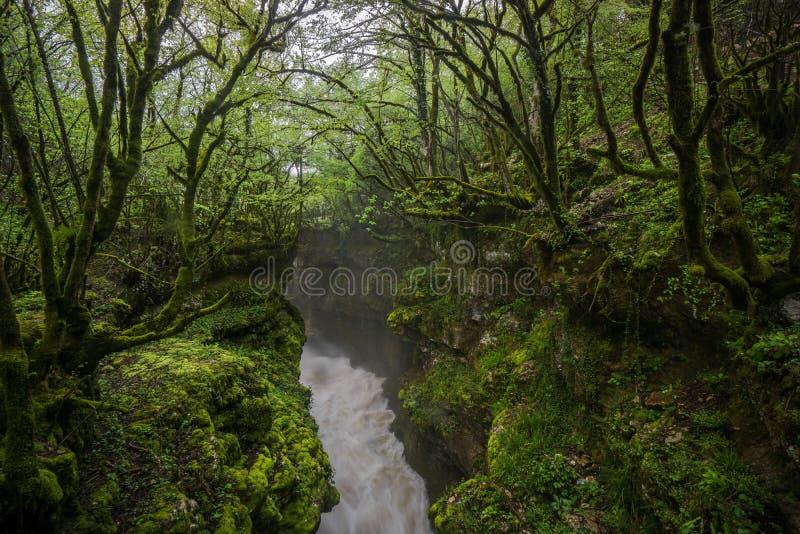 Forsar för Martvili kanjonvatten till och med skog royaltyfria bilder