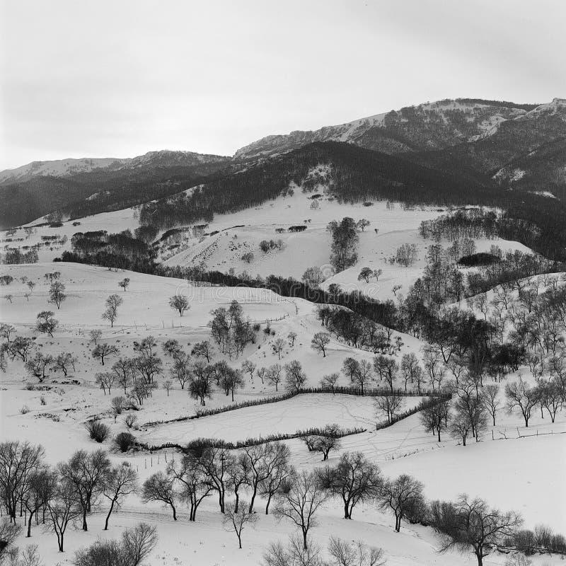 Forse de l'hiver photographie stock libre de droits