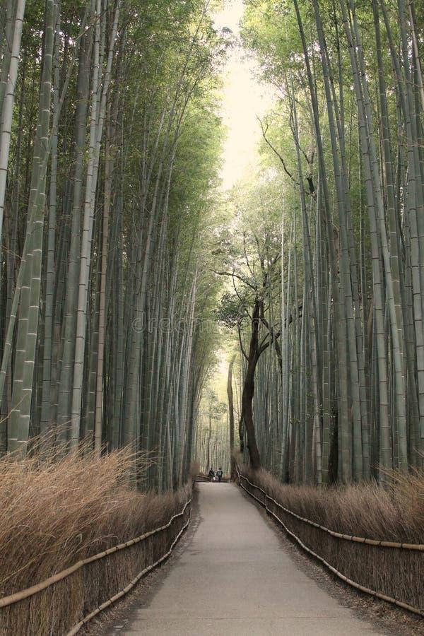 Forset de bambu fotografia de stock royalty free