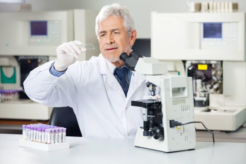 Forskare Analyzing Microscope Slide i labb fotografering för bildbyråer