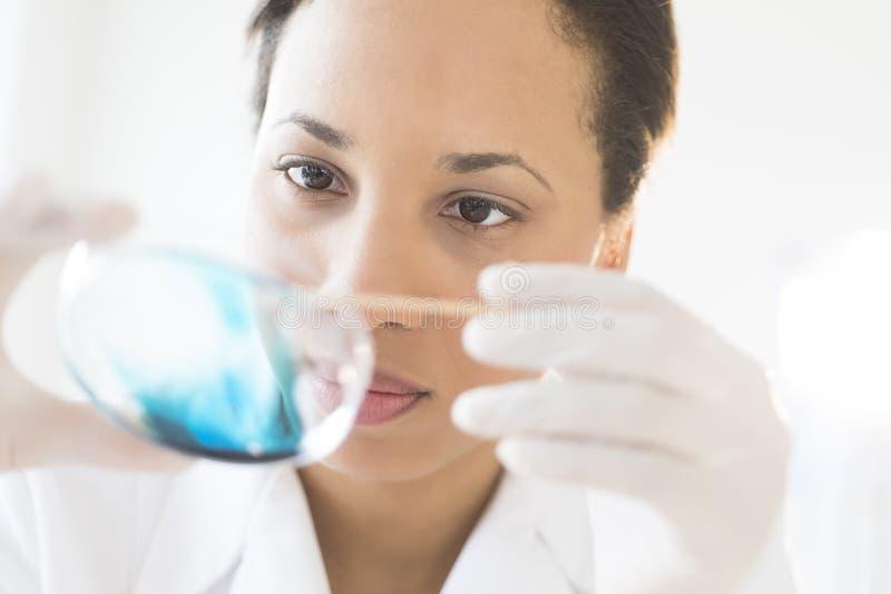 Forskare Examining Solution In Petri Dish At Laboratory arkivfoto