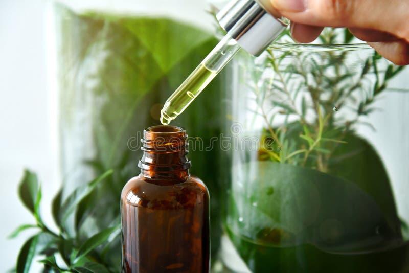Forskare med naturlig drogforskning, naturlig organisk botanik och vetenskaplig glasföremål, grön örtmedicin för alternativ arkivbilder