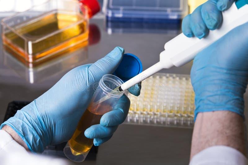Forskare som pipetting en prövkopia från en provrör för kliniska tes arkivfoton
