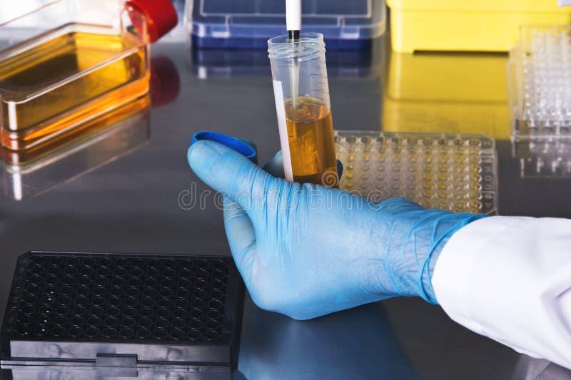 Forskare som samlar en prövkopia från en provrör för en klinisk te royaltyfri bild