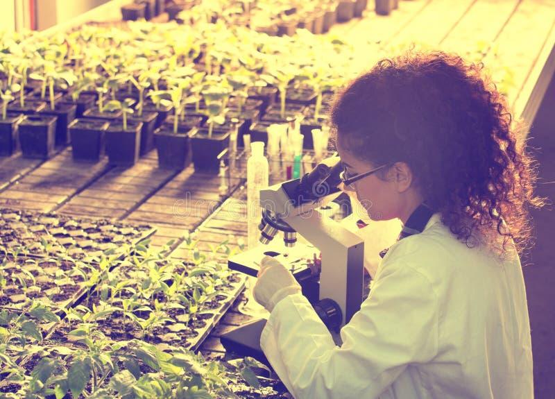 Forskare som ser mikroskopet i växthus arkivfoton