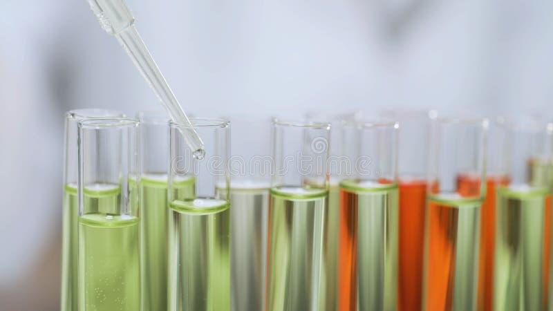 Forskare som tappar serum i glass rör, biochemical utredning, cosmetology royaltyfri bild