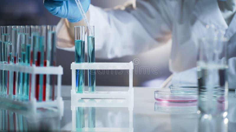 Forskare som tar droppar av flytande till kemisk reaktion för kontroll på forskninglabbet royaltyfri fotografi