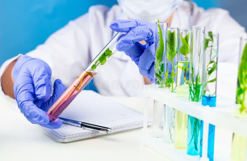 Forskarehållprovrör med växten inom i laboratorium arkivfoton