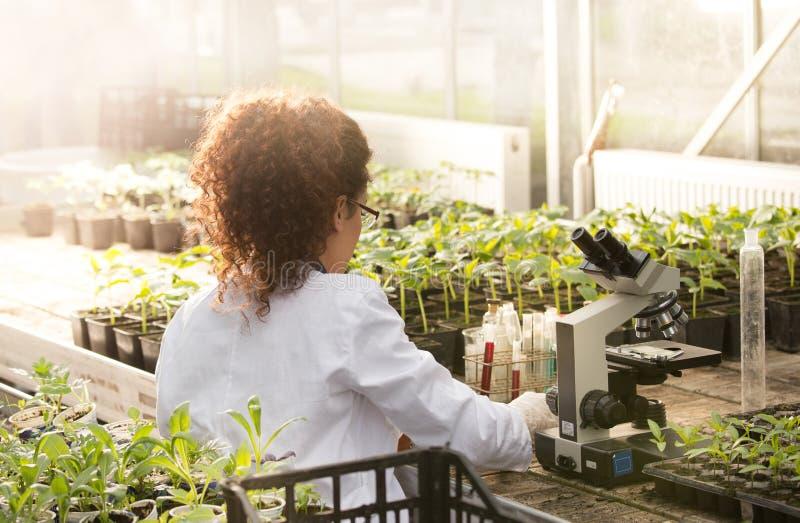 Forskaresammanträde på mikroskopet i växthus arkivfoto