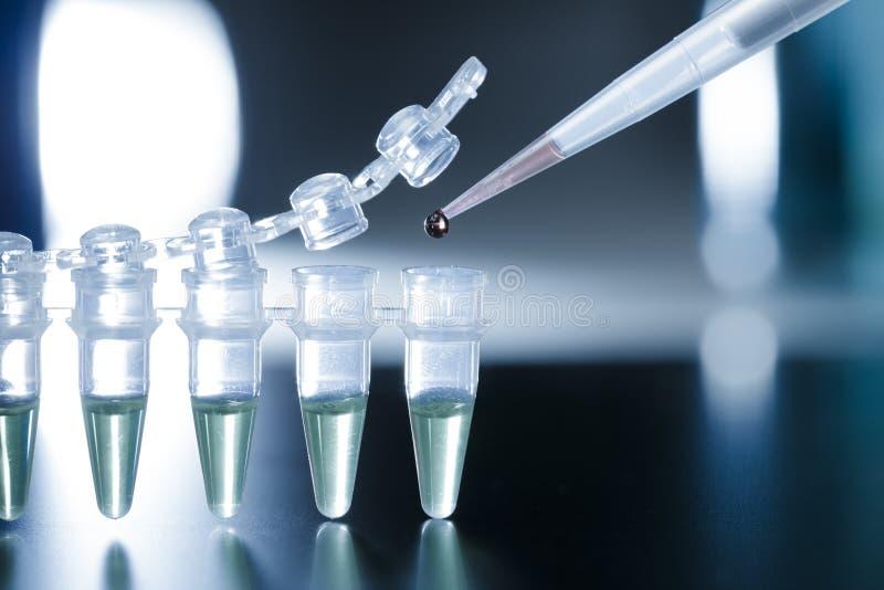 Forskning för Stemcell royaltyfria foton