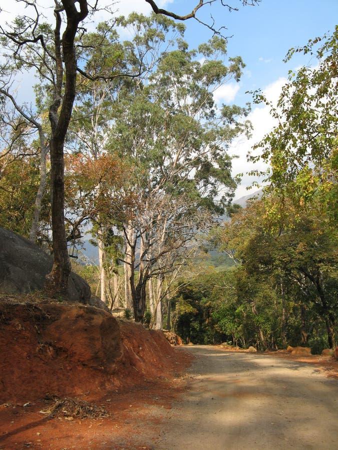 Forststraße, Malawi stockbilder