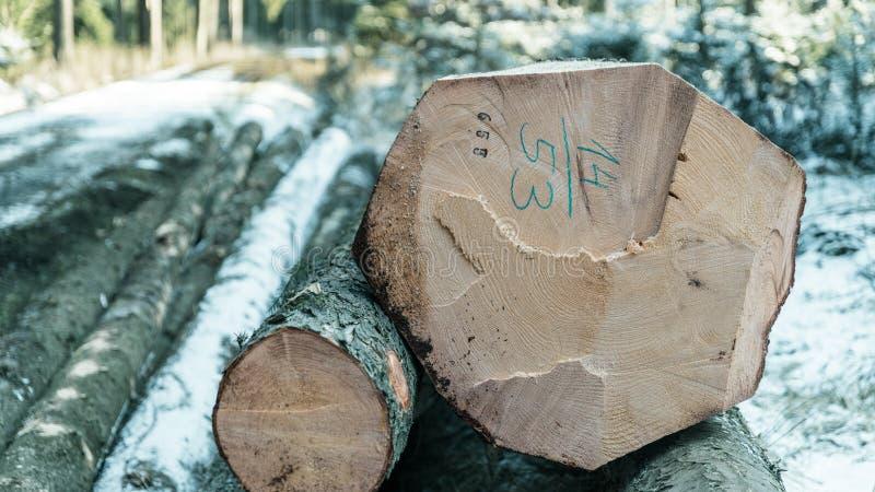 Forstwirtschaft und Anmelden des künstlerischen Details lizenzfreies stockfoto