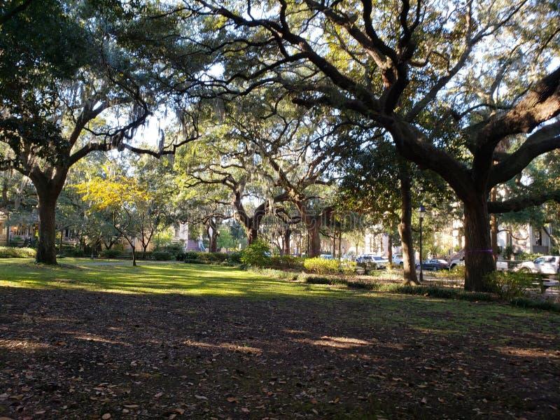 Forsyth parkerar Savannah Georgia royaltyfri bild