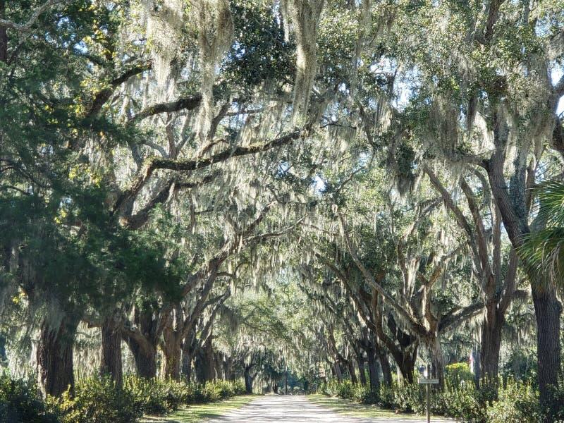 Forsyth parkerar Savannah Georgia royaltyfria foton