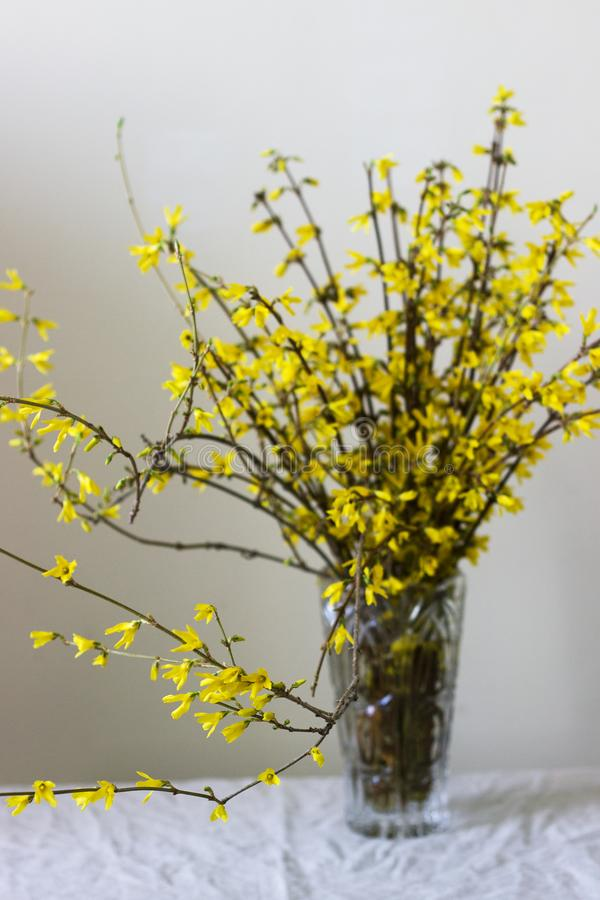 Forsythia bouquet in a crystal vase against the background of a light wall. royalty free stock photography